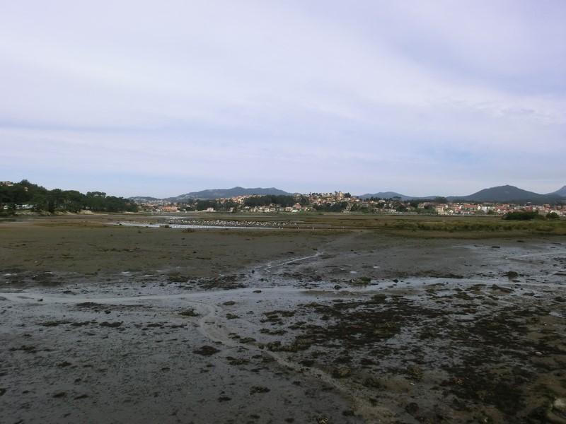Xunta-convoca-seis-novos-permisos-explotación-marisqueo-Confraría-Baiona
